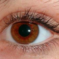 Imagem da notícia: AquaConfort permite maior bem-estar no uso de lentes