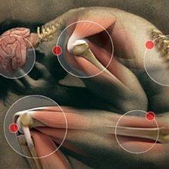 Imagem da notícia: Para conhecer a dor