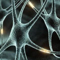 Imagem da notícia: Investigação em neurociência