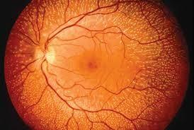 Imagem da notícia: Criado implante sem fios para a retina