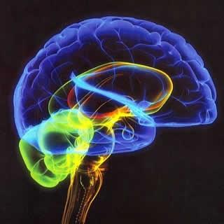 Imagem da notícia: Exame cerebral prevê resposta de doentes com ansiedade social
