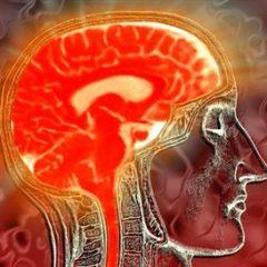 """Imagem da notícia: """"O cérebro tem sexo"""""""