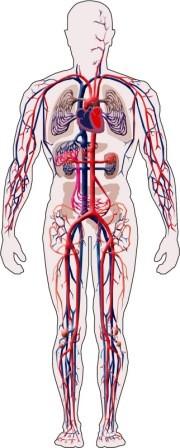 Imagem da notícia: Organismo humano capaz de destruir tumores cancerígenos
