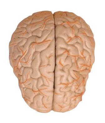 Imagem da notícia: Trabalho sobre doenças neurodegenerativas vence prémio Bial