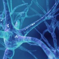 Imagem da notícia: Terapia experimental mostra-se promissora no tratamento de esclerose múltipla
