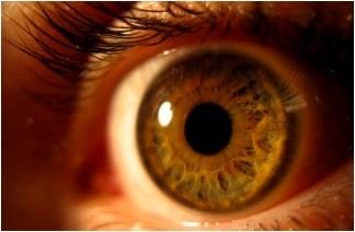 Imagem da notícia: Centro de Tratamento de Tumores Oculares único em Portugal criado em Coimbra