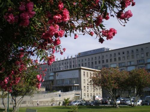 Imagem da notícia: Especialidades médicas concentradas em hospitais de Lisboa