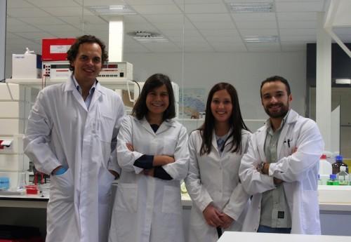 Imagem da notícia: Descoberta origem das células estaminais sanguíneas
