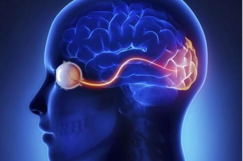"""Imagem da notícia: Prémio Champalimaud destaca """"descobertas extraordinárias na relação entre cérebro e olhos"""""""