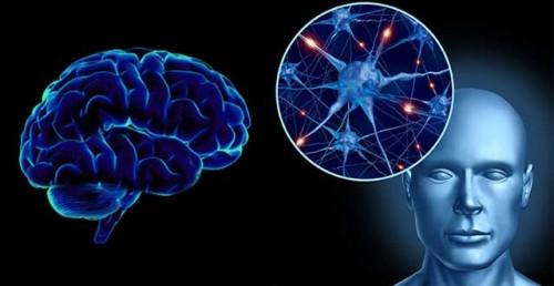 Imagem da notícia: Portugueses lideram descoberta de subestruturas cerebrais