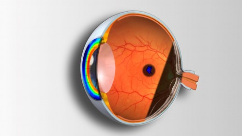 Imagem da notícia: UMinho: Curso Técnicas Complementares de Análise e Patologia Ocular