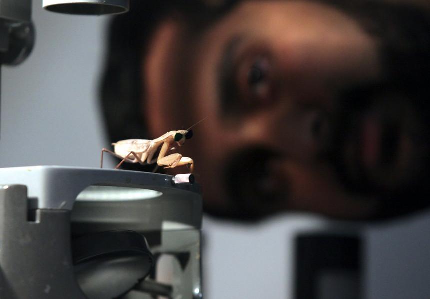Imagem da notícia: Como vê um louva-a-deus?