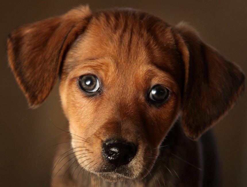 """Imagem da notícia: """"Olhos de cachorrinho"""" são resultado da evolução da espécie"""