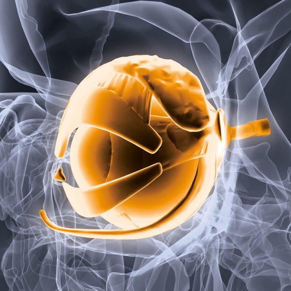 Imagem da notícia: CUF Descobertas realiza reunião sobre tumores orbitários