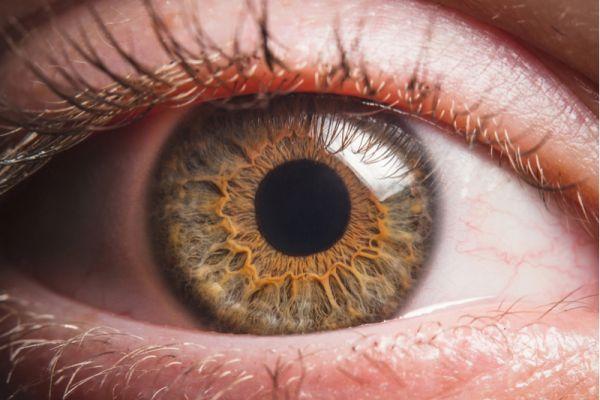 Imagem da notícia: Reino Unido: oftalmologistas e optometristas unem-se em prol da saúde visual