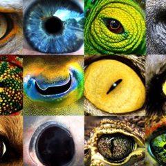Imagem da notícia: Sistema visual: como detetamos animais perigosos